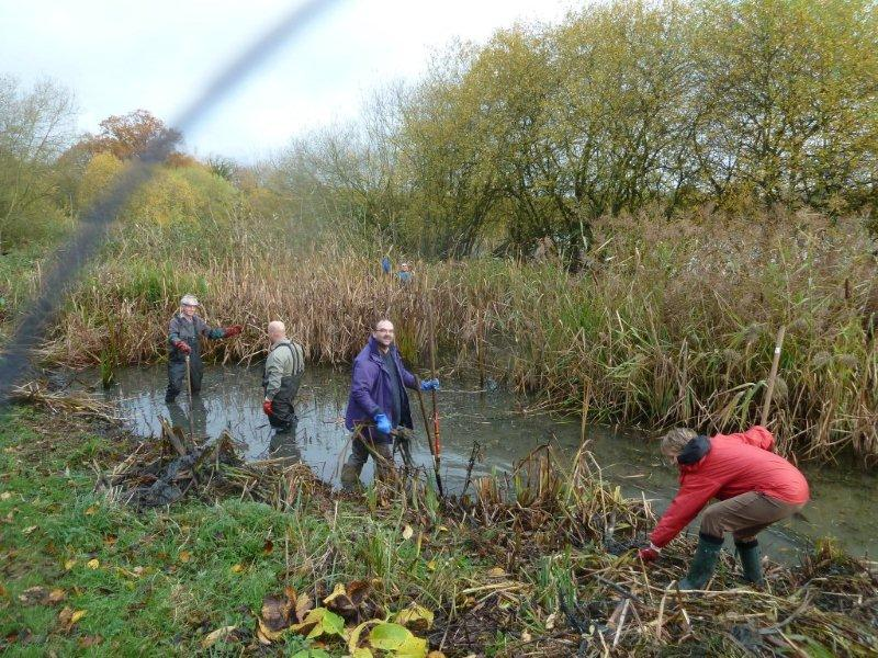 Dragonfly Pond Clearance Work Party